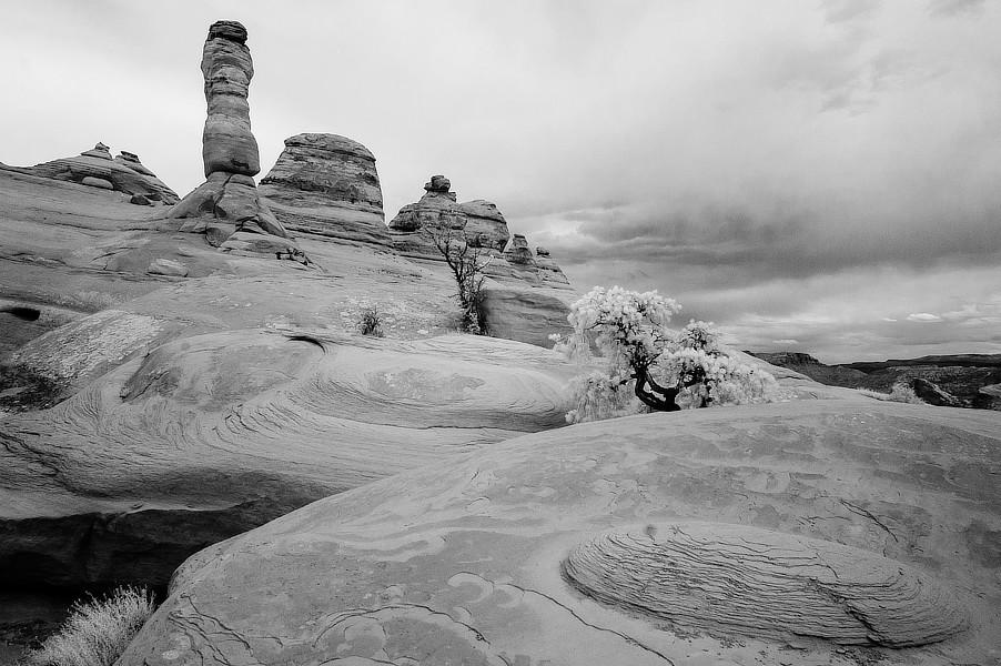 Infračervená černobílá fotografie skal a stromu, NP Arches, Utah