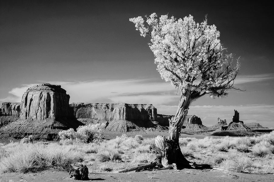 Infračervená černobílá fotografie skal ve stylu Marloboro County se stromem v popředí, NP Monument Valley, Utah.